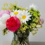 Blumen_CAH4186